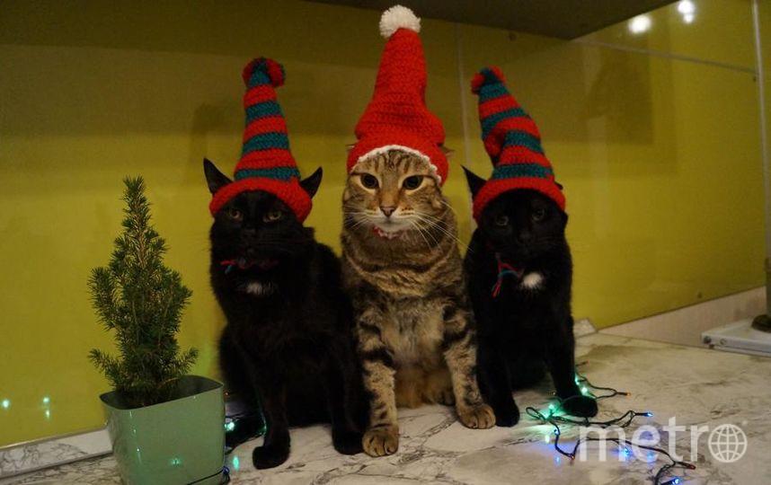 """Фото моих котиков: Эридор, Барсик, Дрогон. Фото Елена Гуляева., """"Metro"""""""