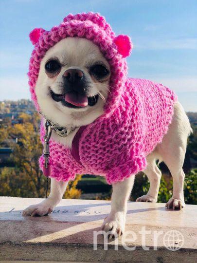 """Фунтик ( имя собаки) - очень добрый и веселый пес, заранее подготовил костюм новогоднего поросенка. Фото Маргарита Горюшкина, """"Metro"""""""