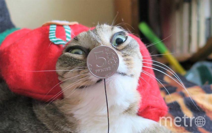 """Здравствуйте, Я РЫСЯ, коренная питерская кошка с улицы Марата, немножко вороватая, но в меру. Люблю греться на чугунной батарее и обожаю шкурки от сарделек. Я примерила облегченный костюм Пятачка.. Фото Сергей и Рыська, """"Metro"""""""