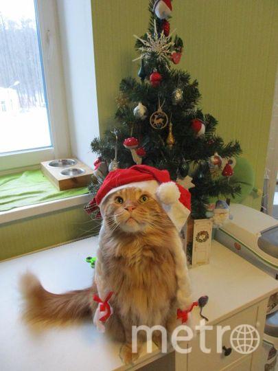 """Мейн-кун Фрай желает всем классных подарочков под ёлку! Фото Наталья, """"Metro"""""""