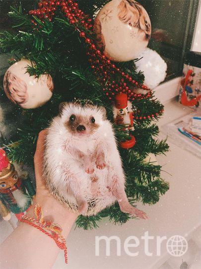 """Посылаю Вам моего новогоднего ежа) Это ее первые рождественские праздники). ежа зовут Женя! Фото """"Metro"""""""