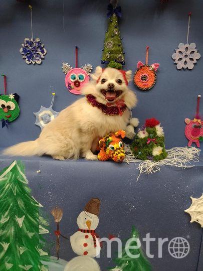 """Собака Клюква. Хозяйка алиса. Фото """"Metro"""""""