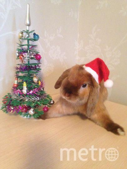 """Кролик Липтон поздравляет Всех с НОВЫМ ГОДОМ! Настя. Фото """"Metro"""""""