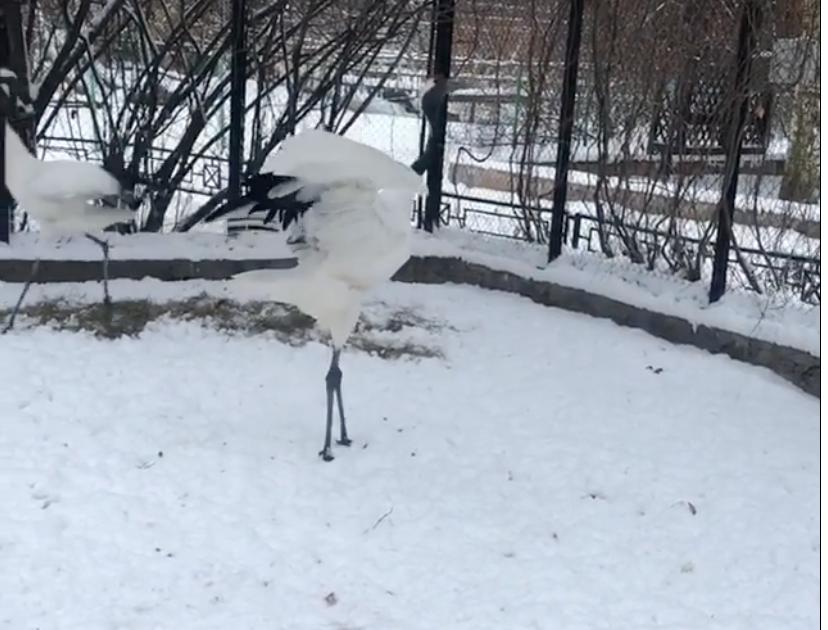 Фото: Ленинградский зоопарк.