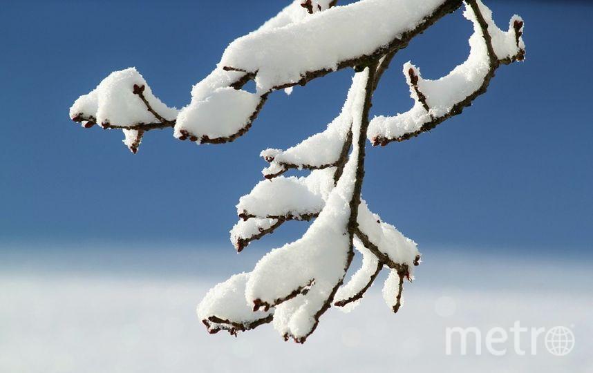 Агеев день: Приметы и обычаи на 29 декабря. Фото pixabay.com
