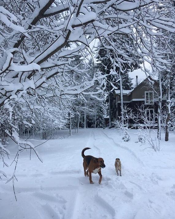 Снежная сказка: Петербуржцы делятся зимними фото в Instagram. Фото Скриншот Instagram: @kostish7