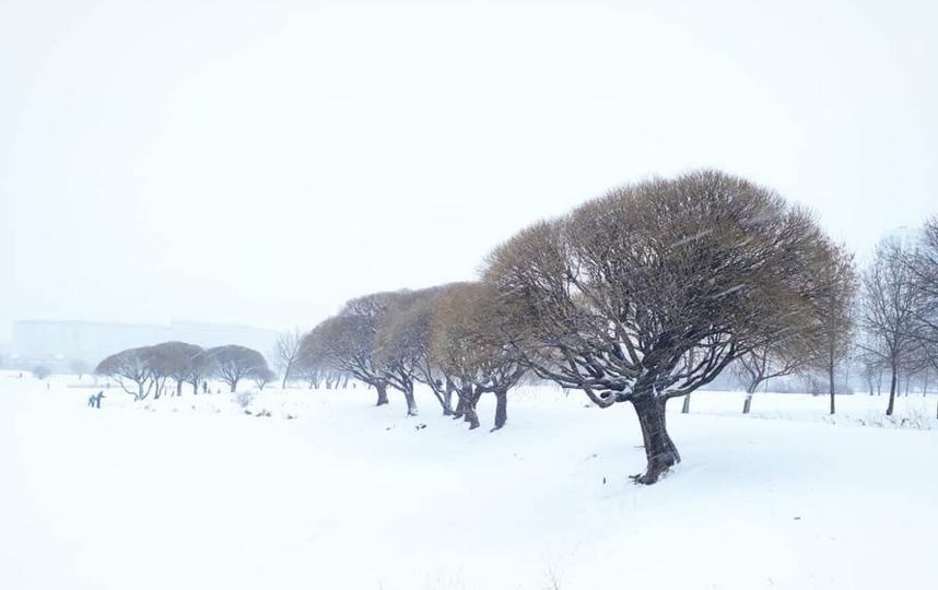 Снежная сказка: Петербуржцы делятся зимними фото в Instagram. Фото Скриншот Instagram: @iskorka_siberia