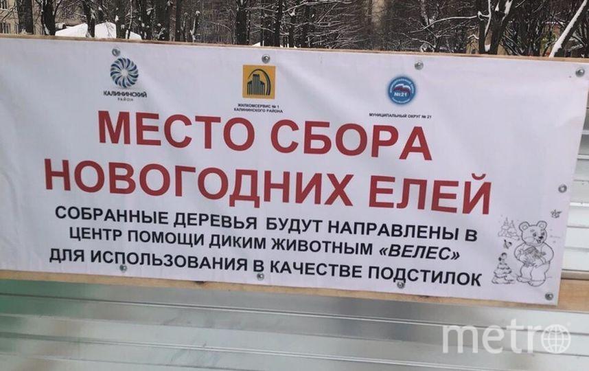 Фото: vk.com/elki_palki_bizoni. Фото vk.com