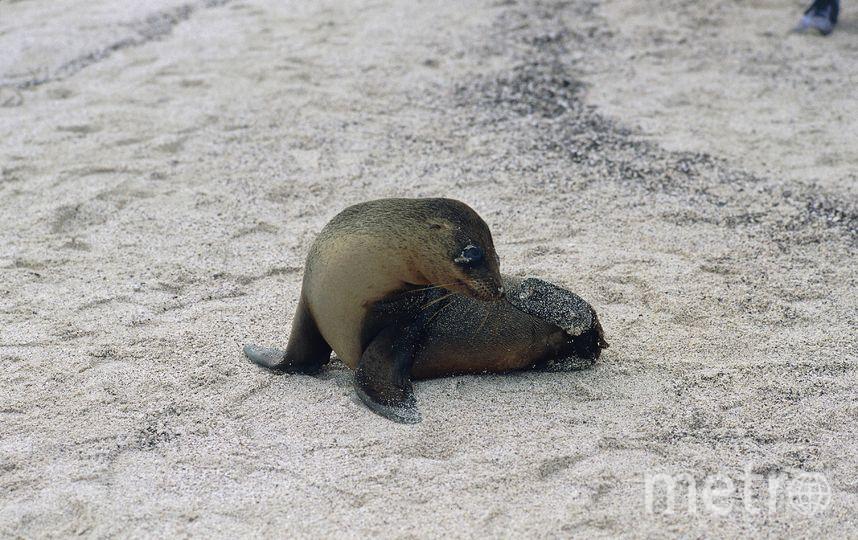 Животные удалились от океана на несколько километров. Фото Getty