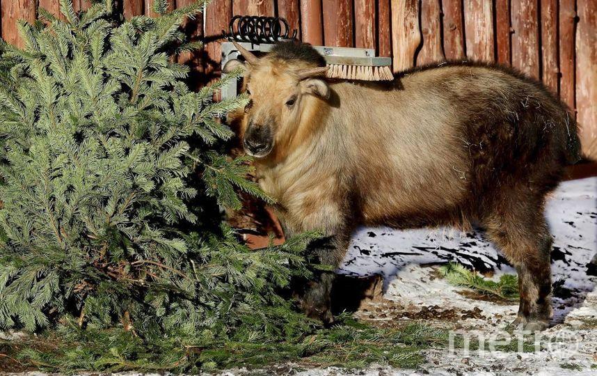 Фото Московского зоопарка. Фото moscowzoo.ru