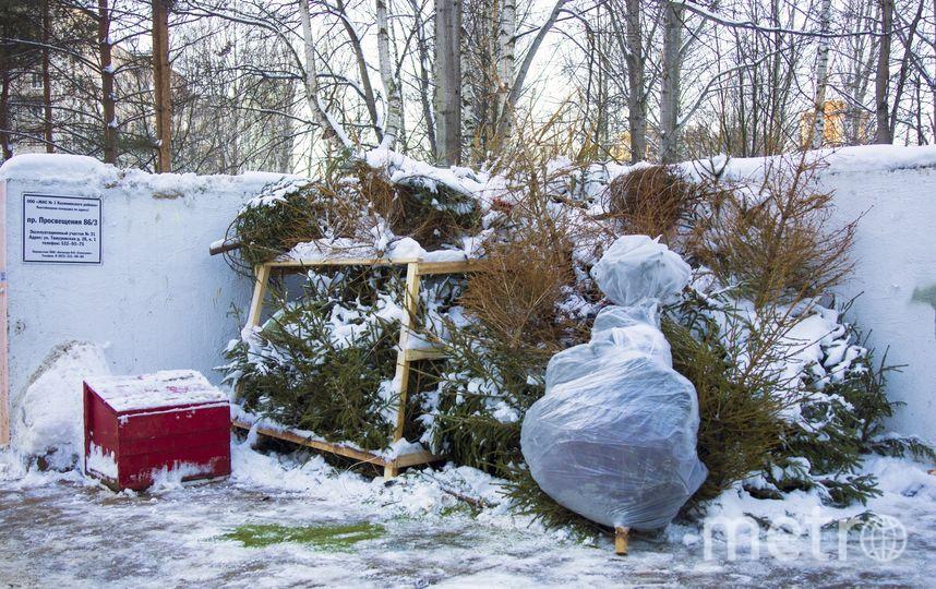 """1. Пункты приёма в Калининском районе быстро завалили ёлками. 2. Специальные дробилки измельчают хвойные. Фото vk.com/elki_palki_bizoni, """"Metro"""""""