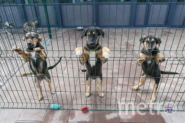 Каждое лето в Южной Корее съедают около миллиона собак. Фото Getty