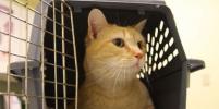 Бесплатный пункт стерилизации кошек и собак откроется в Москве 21 января
