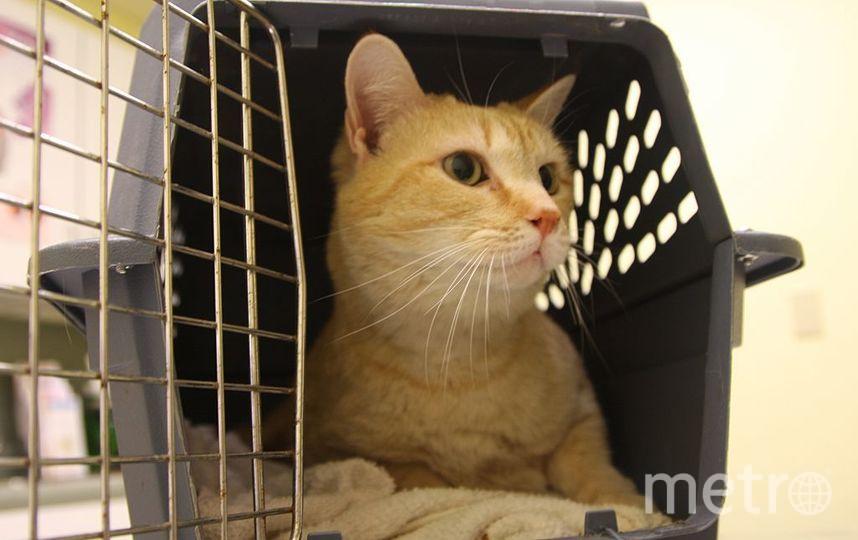 Уличных и беспородных домашних животных там будут оперировать по предварительной записи. Фото Getty