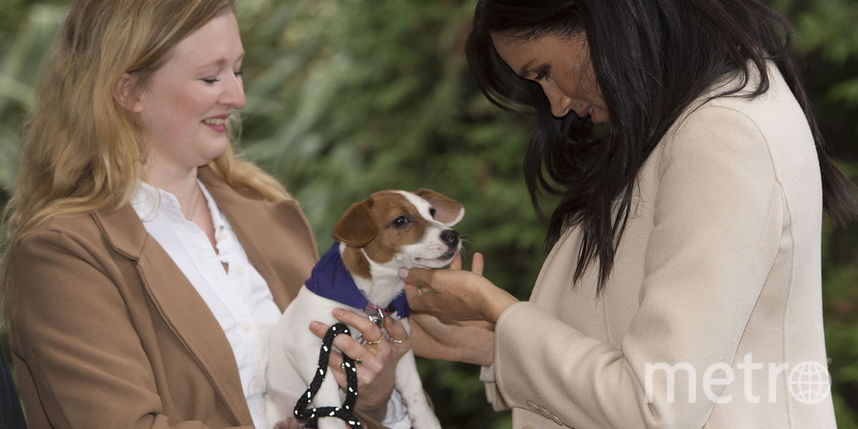 Беременная Меган Маркл расцвела в улыбке, взяв на руки собаку: фото и видео