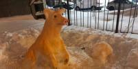 В Петербурге появился снежный