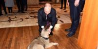 Путину подарили собаку по имени Паша
