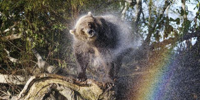 """""""Радужный медведь""""."""