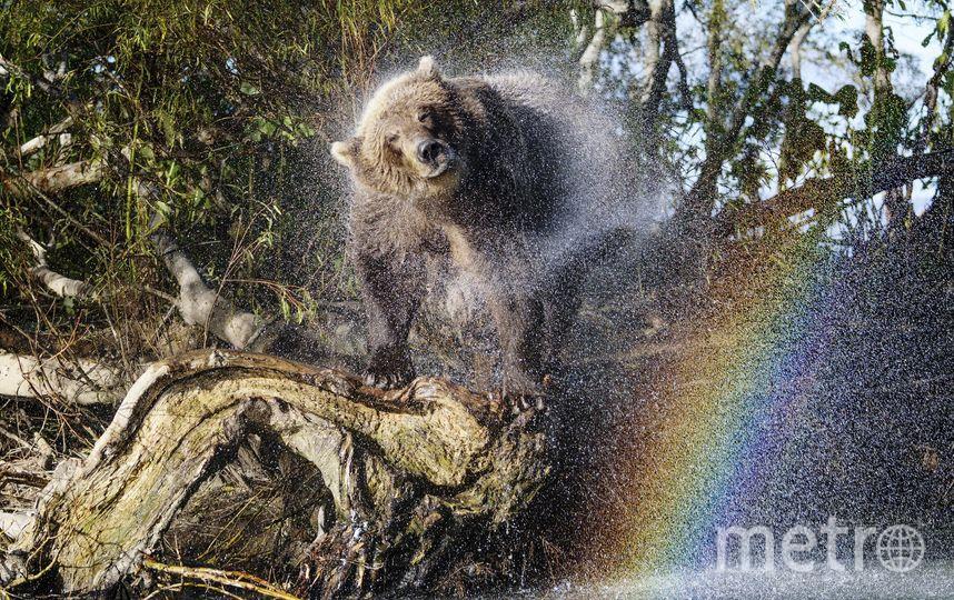 """""""Радужный медведь"""". Фото Варавская Лиана"""