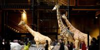 Рената Литвинова оценила показ Vetements с жирафами и зебрами в Париже