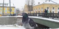 Мороз крепчает: какой будет погода в Петербурге на Крещение