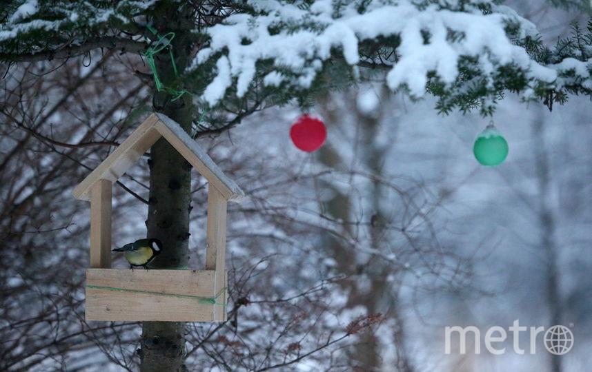 У птиц возникают трудности с поиском корма. Фото Getty