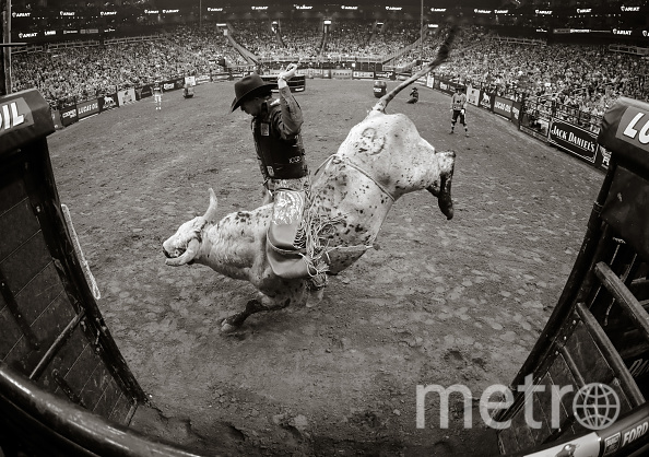 Мейсон Лоу – один из лучших наездников на быках в мире. Только за время последнего сезона он одержал победу в 70 процентах выступлений. Фото Getty