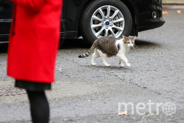 Владельцы Сиднея на протяжении трёх лет думали, что кот погиб. Фото Getty