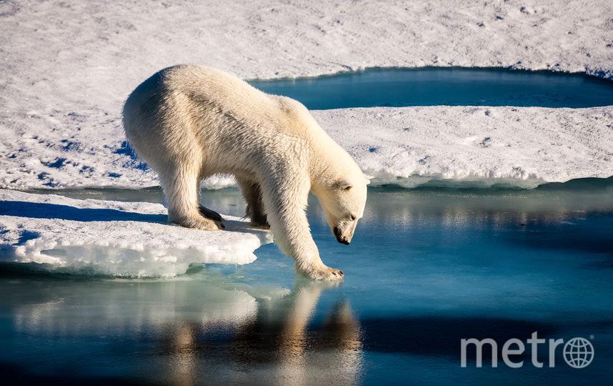 За последние 40 лет процесс таяния льдов в Арктике ускорился в 6 раз. Фото iStock