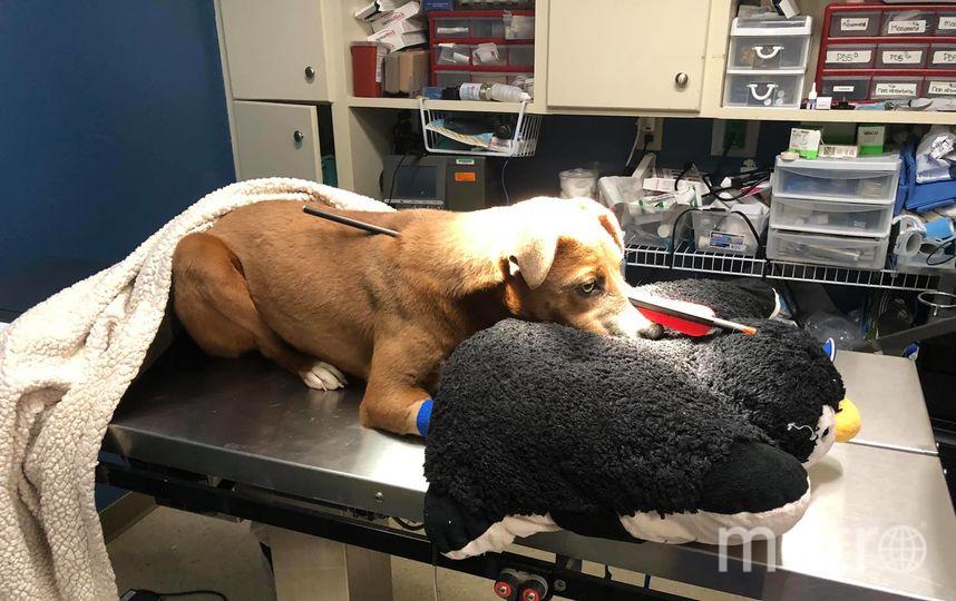 Лока только начала наслаждаться жизнью, семья недавно взяла её из приюта. Фото Скриншот facebook.com/nikki.jones.3950