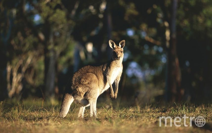 Австралия. Фото Getty