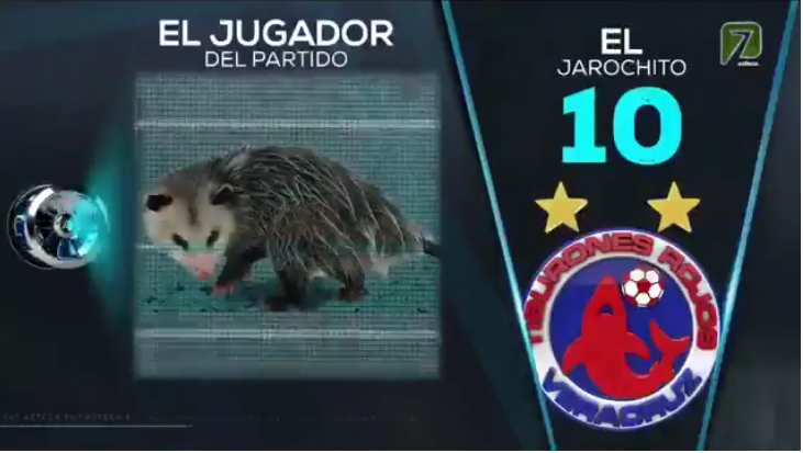 Опоссум стал звездой мексиканского телевидения. Фото Скриншот Youtube