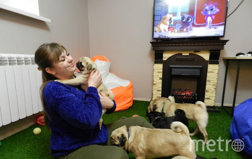 Врачи сказали, что собаки в порядке, и выдали справки. Фото Юлия Долгова