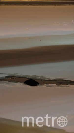 Нерпенок под мостом. Фото sealrescue, vk.com