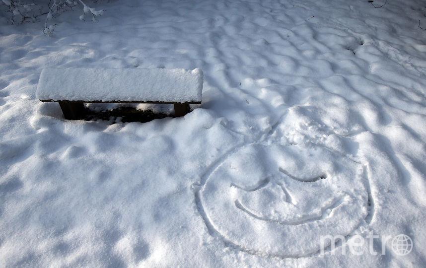 Канадцы разгадывают тайну возникновения пупка в центре нарисованного медведя без каких-либо следов. Фото Getty