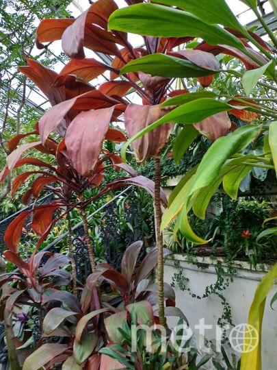"""Одна из коллекций Ботанического сада. Фото """"Metro"""""""