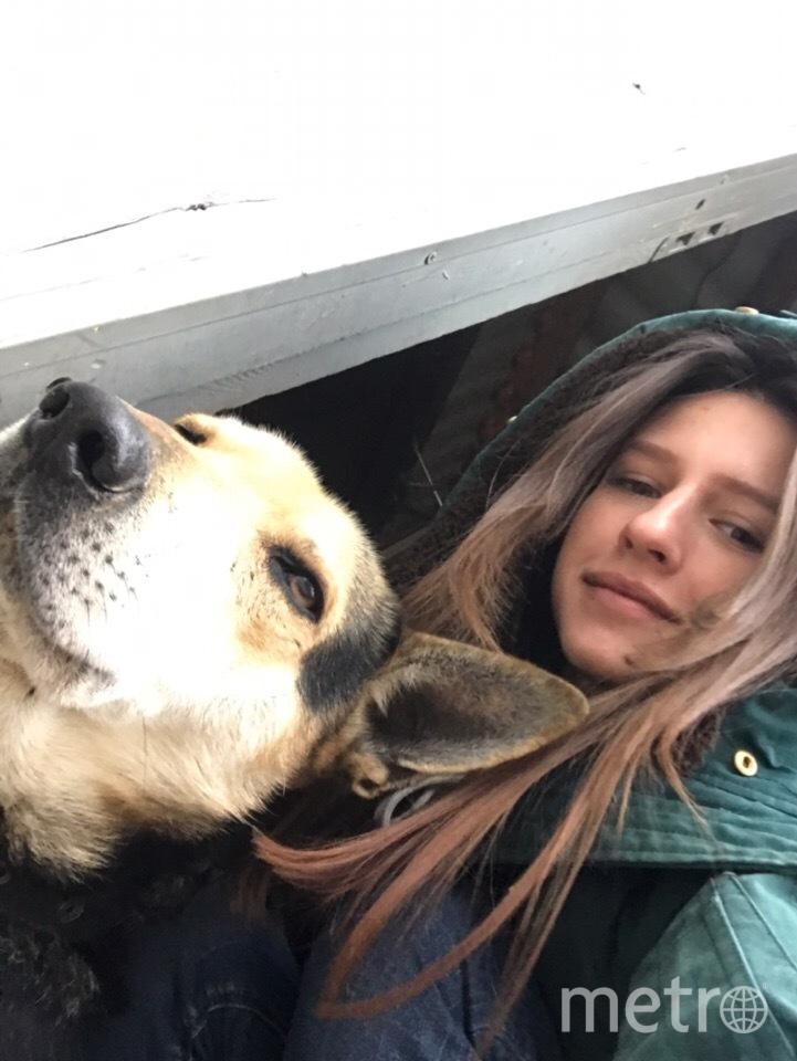 Кольт - любимец Дианы и ее коллег. Фото Диана Гавриленко
