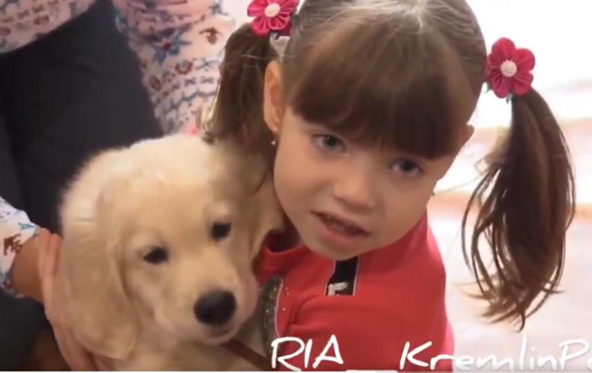 Владимир Путин подарил больной аутизмом девочке из Приморья щенка золотистого ретривера. Фото скриншот twitter.com/Kremlinpool_RIA