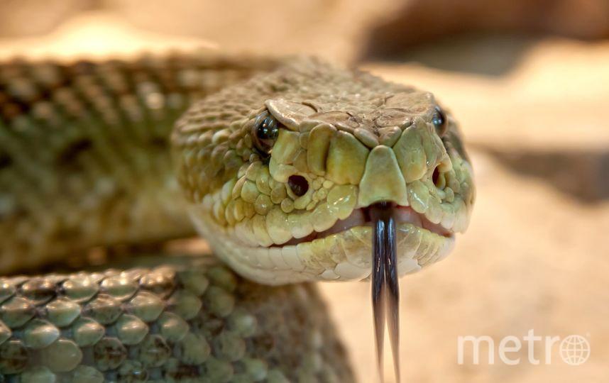 Победитель сможет назвать ядовитую змею именем бывшего партнёра. Фото Pixabay