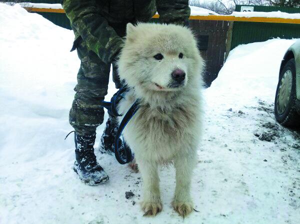 Таким пёс попал в приют. Фото Ангелина Горохова, vk.com