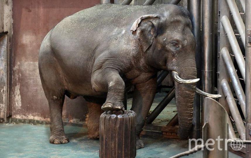 Слон. Фото Все фото предоставлены пресс-службой Московского зоопарка