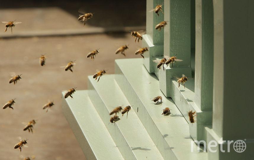 Пчёлы. Фото Getty