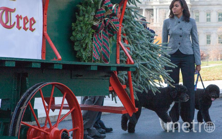 Мишель Обама с собаками Бо и Санни. Фото Getty