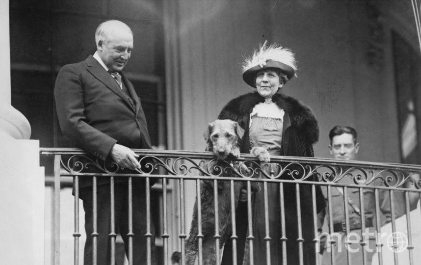 Уоррен Хардинг и его эрдель. 1922 год. Фото Getty