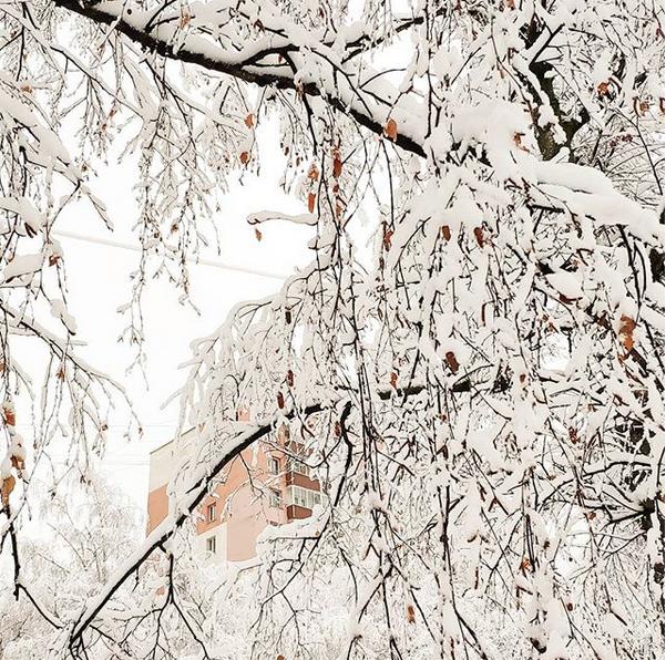 """""""Красота на улице. Всё в снегу"""". Фото Скриншот instagram.com/ryzhik_knitting/"""