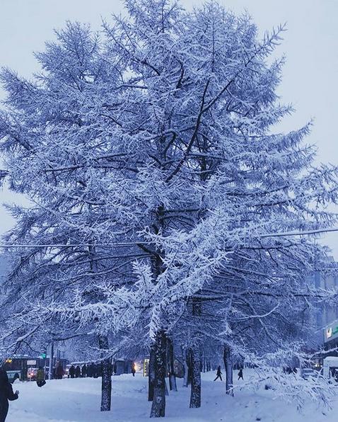"""""""Волшебное утро! Деревья превратились в пушистые снежные ели"""". Фото Скриншот instagram.com/leno4ka_koloskova/"""