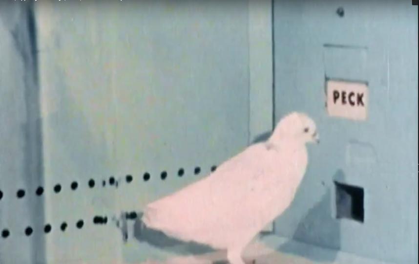Приложения для знакомств затягивают людей так же, как голубей – игра с кормом. Фото кадр из Фильма  «Свайп: Правила съёма в цифровую эпоху»
