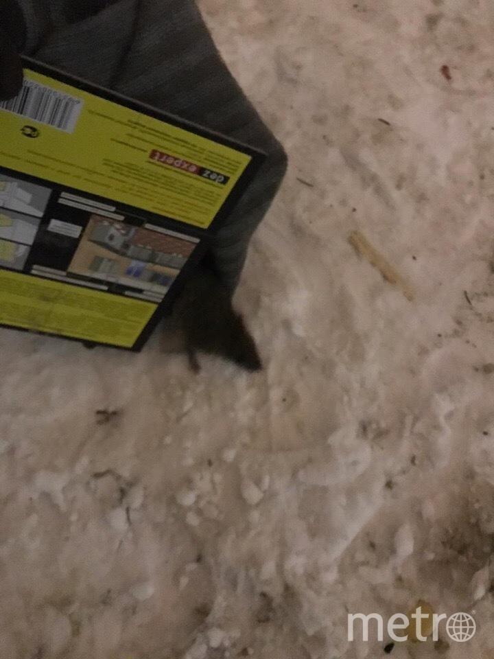 """Крыс больше всего рядом с помойкой во дворе. Фото предоставлено читателем , """"Metro"""""""