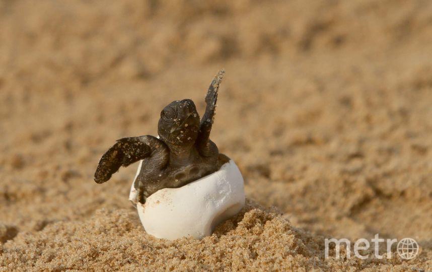 Обычный детеныш черепахи, архивное фото. Фото Getty