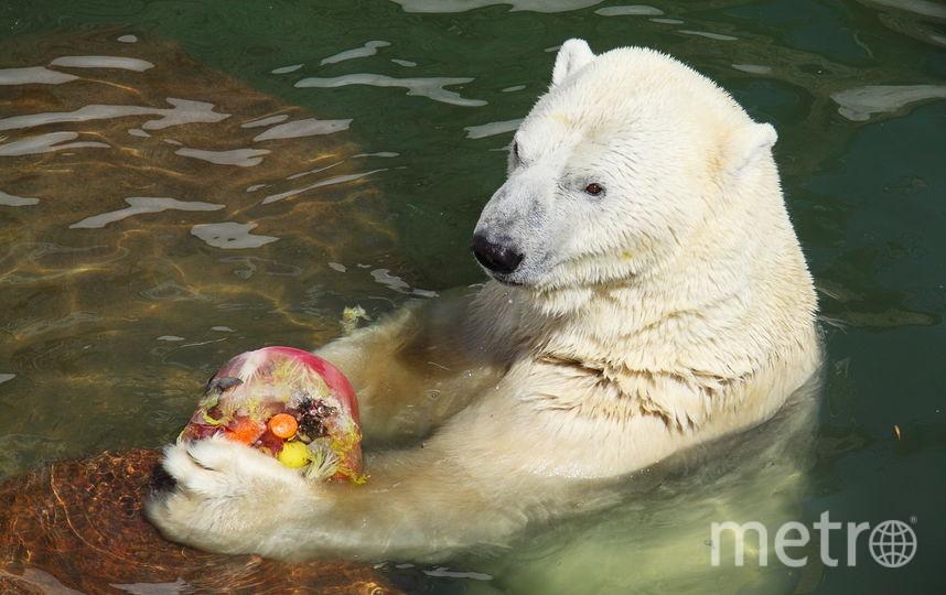 """Так выглядит торт для медведей. Фото Ленинградский зоопарк, """"Metro"""""""